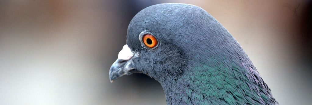 Bird Control Experts for West Yorkshire